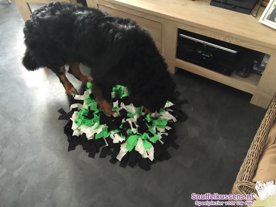 Snuffelen is ook voor de grote hondjes!