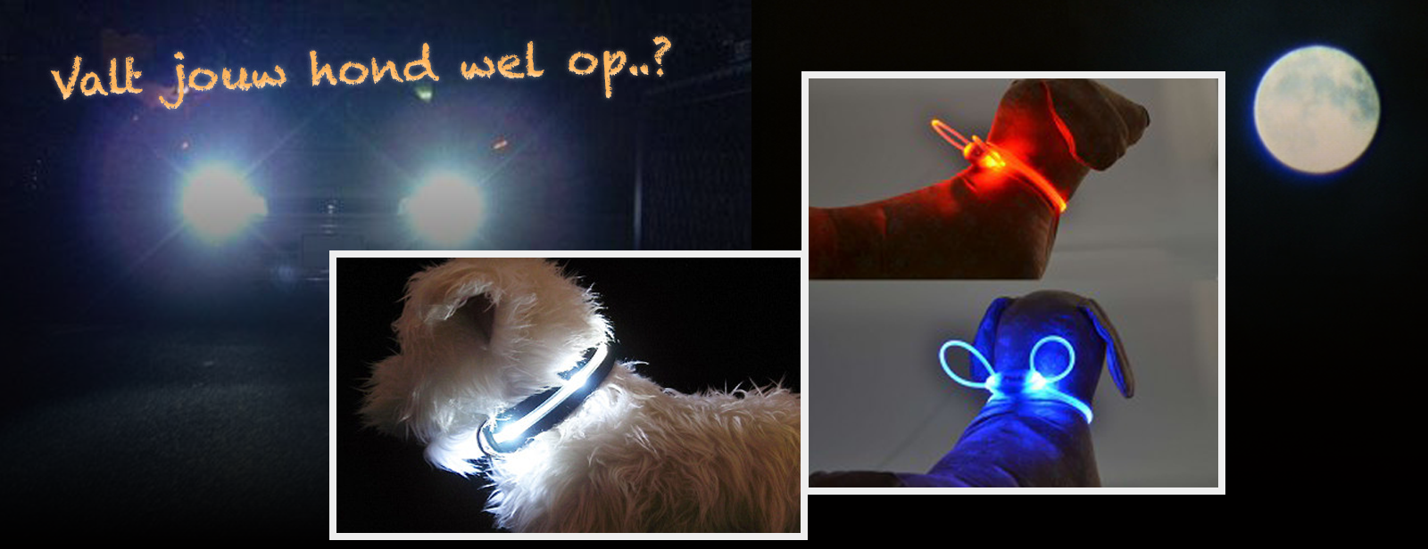 verlichting hond